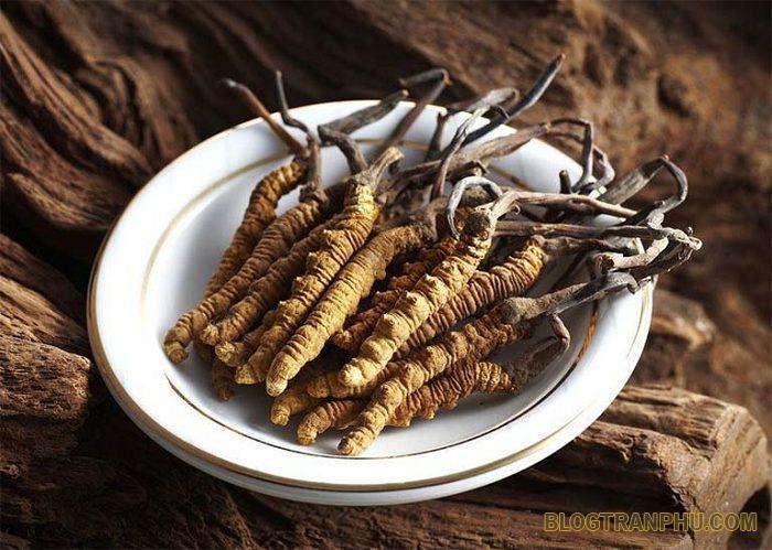 Đông trùng hạ thảo dạng viên nào được ưa chuộng nhất hiện nay?