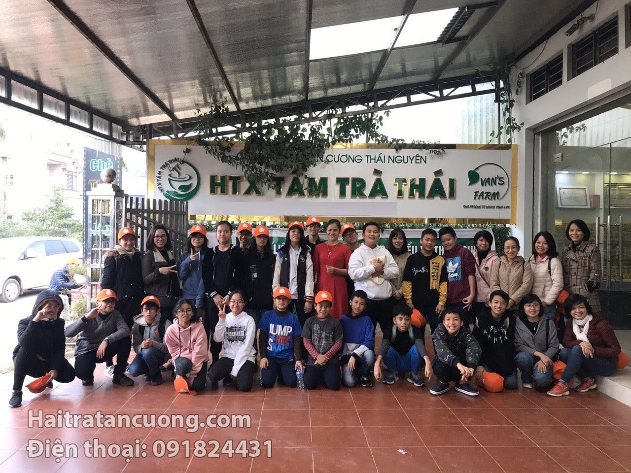 Tại sao nên mua trà xanh Thái nguyên mua ở Hải Trà Tân Cương?