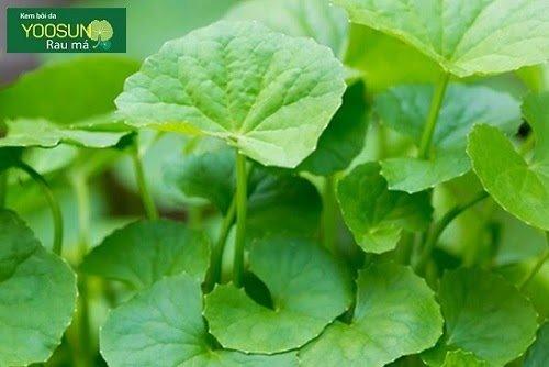 Kem yoosun rau má có tác dụng gì