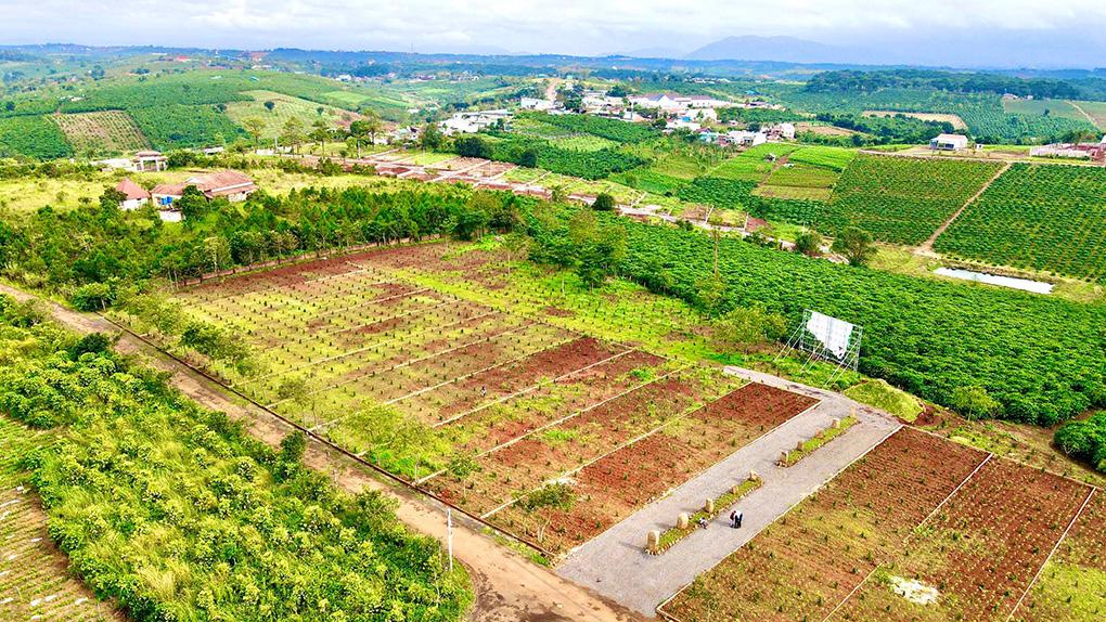 Dự án Sun Flower Hill - Biệt thự Đồi Hướng Dương 500m2 đáng đầu tư tại Bảo Lộc